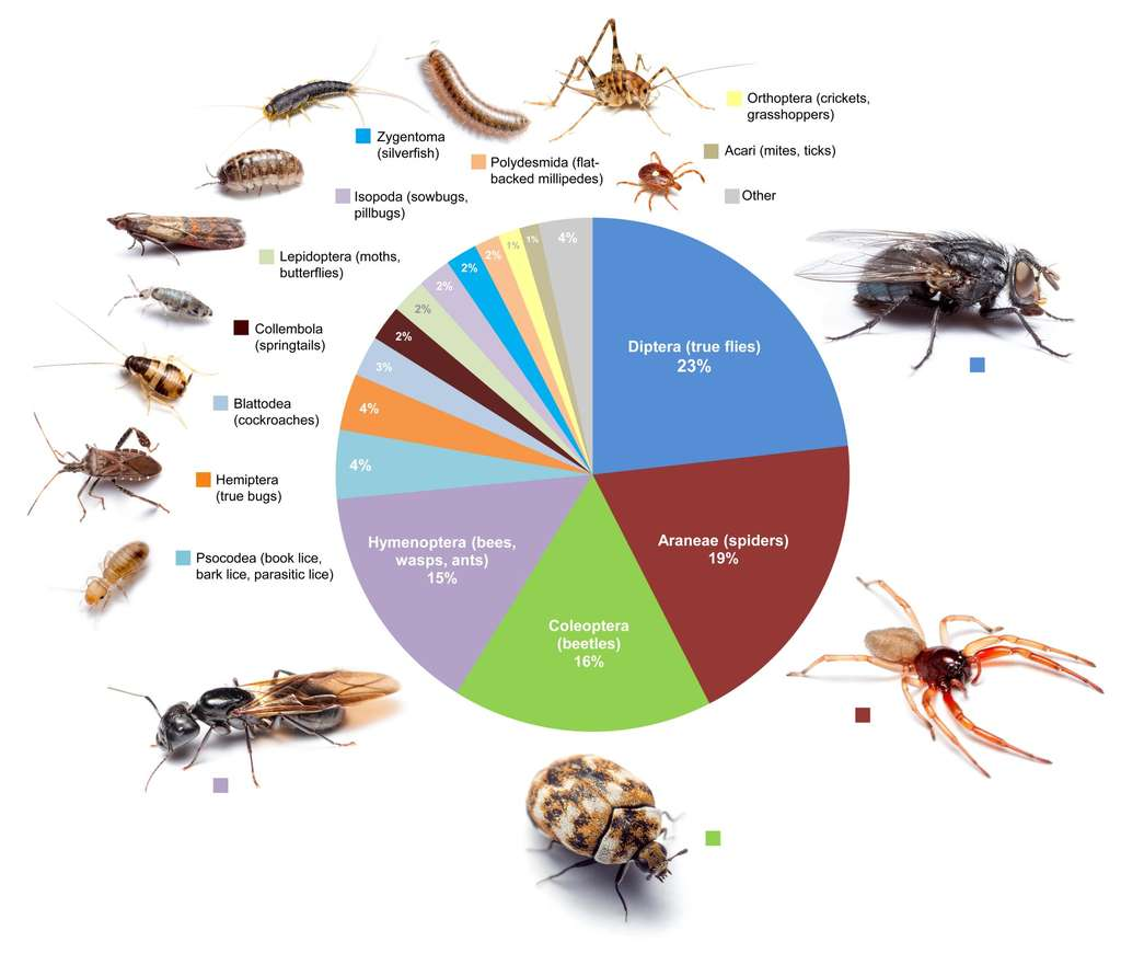 Les groupes d'arthropodes les mieux représentés en nombre d'espèces (et pas en nombre d'individus) dans 50 maisons individuelles dans et autour de Raleigh, capitale de l'État de Caroline du Nord, sur la côte est des États-Unis. © Bertone et al.