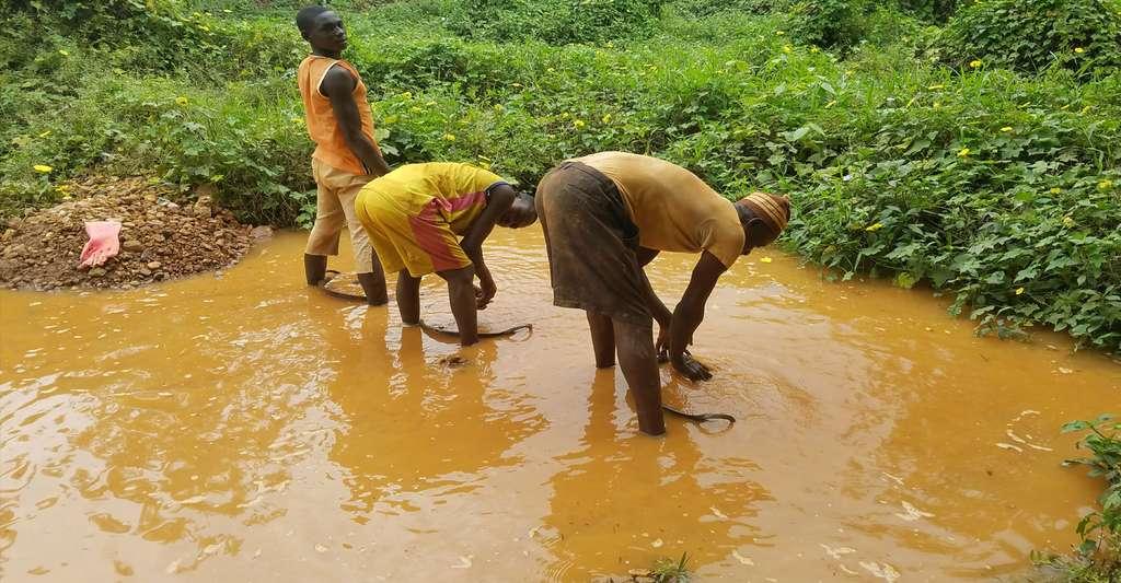 Recherche d'or en Guyane. © Dame Yinka, Wikimedia commons, CC by-sa 4.0
