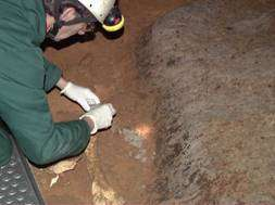 La délicate opération d'extraction d'un ossement à l'intérieur de la grotte Chauvet-Pontd'Arc. ©M.-A. Garcia