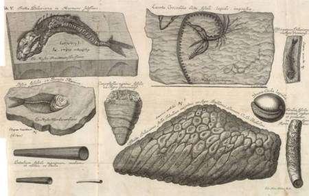 Une des premières figurations des poissons fossiles en provenance du Liban par J. J. Scheuchzer, Piscium querelae et vindiciae (1708).