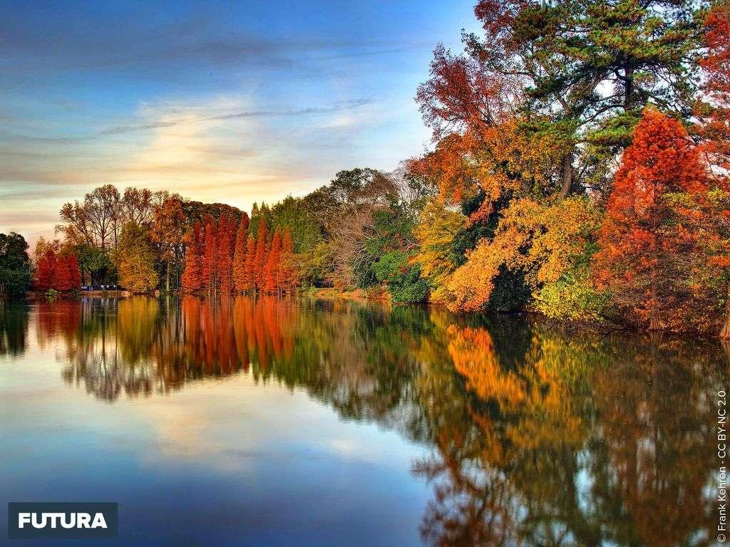 Automne sur le Lac Clara Meer - Atlanta