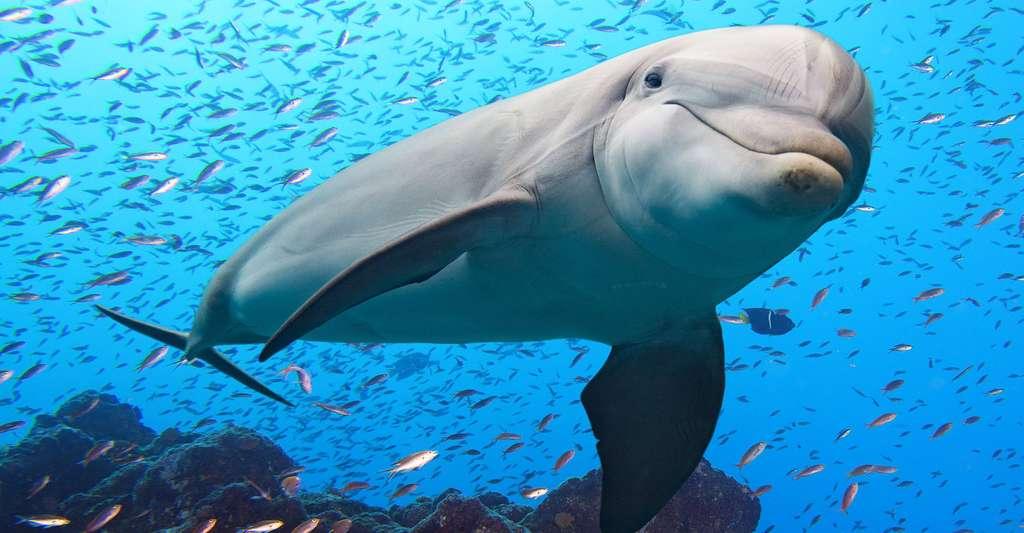 Les animaux comme le dauphin ont-ils une culture ? © Andrea Izzotti, Shutterstock