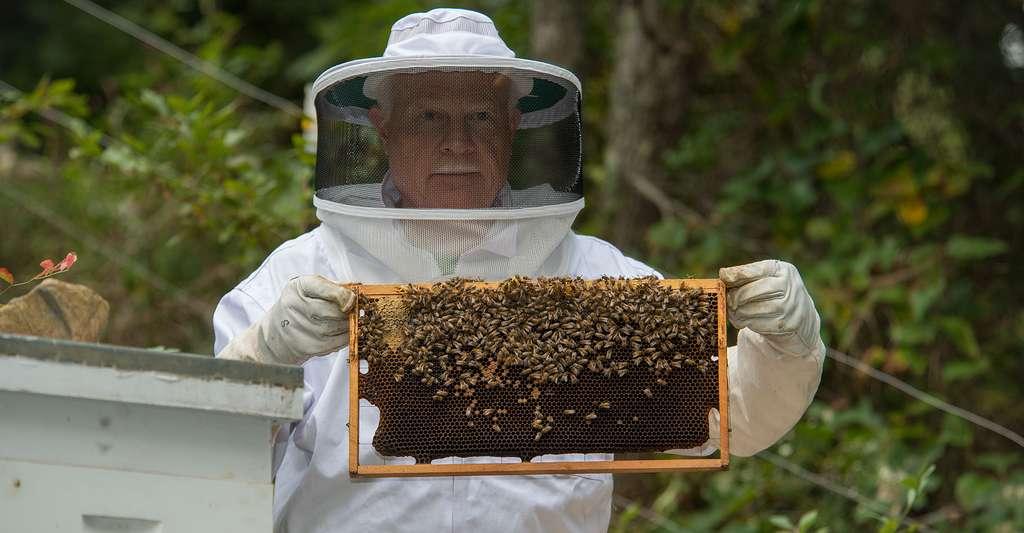 Du matériel de protection est nécessaire pour faire de l'apiculture. © Jadimages, Shutterstock