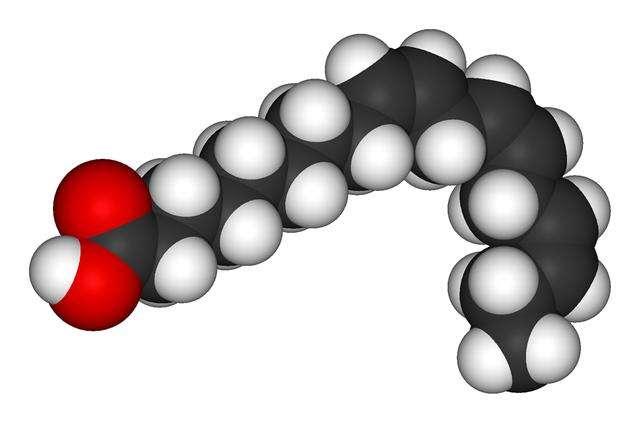 L'acide alpha-linolénique (ALA), dont on voit ici une représentation tridimensionnelle, est un oméga-3 avec pour formule chimique C18H30O2. On le trouve en grande quantité dans certaines huiles de graines végétales, comme le lin, le colza ou les noix. © Benjah-bmm27, Wikipédia, DP