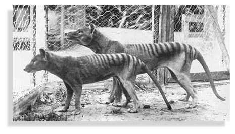 La femelle est la plus petite. Photos Copyright : Nature focus, Australian Museum