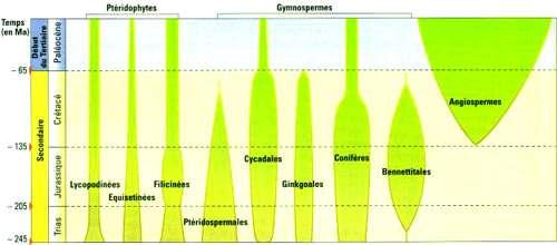 Évolution des végétaux depuis 245 millions d'années. © Éditions Belin