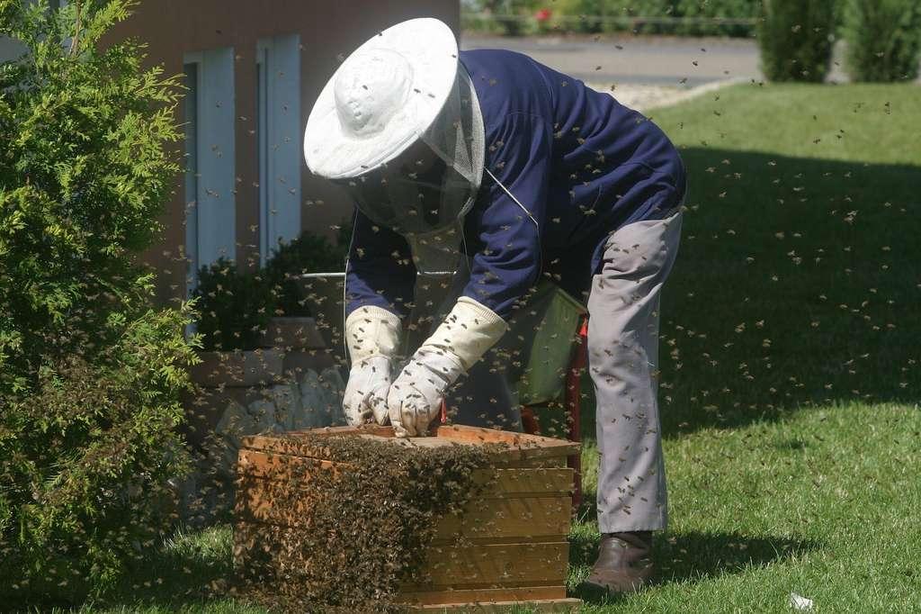 Si certains prennent le risque de garder leurs vêtements civils pour travailler au rucher, les apiculteurs professionnels préfèrent jouer la carte de la sécurité et se vêtir de blanc avant d'approcher les essaims. Objectif : éviter d'exciter les abeilles. © tassilo111, Pixabay, CC0 Public Domain
