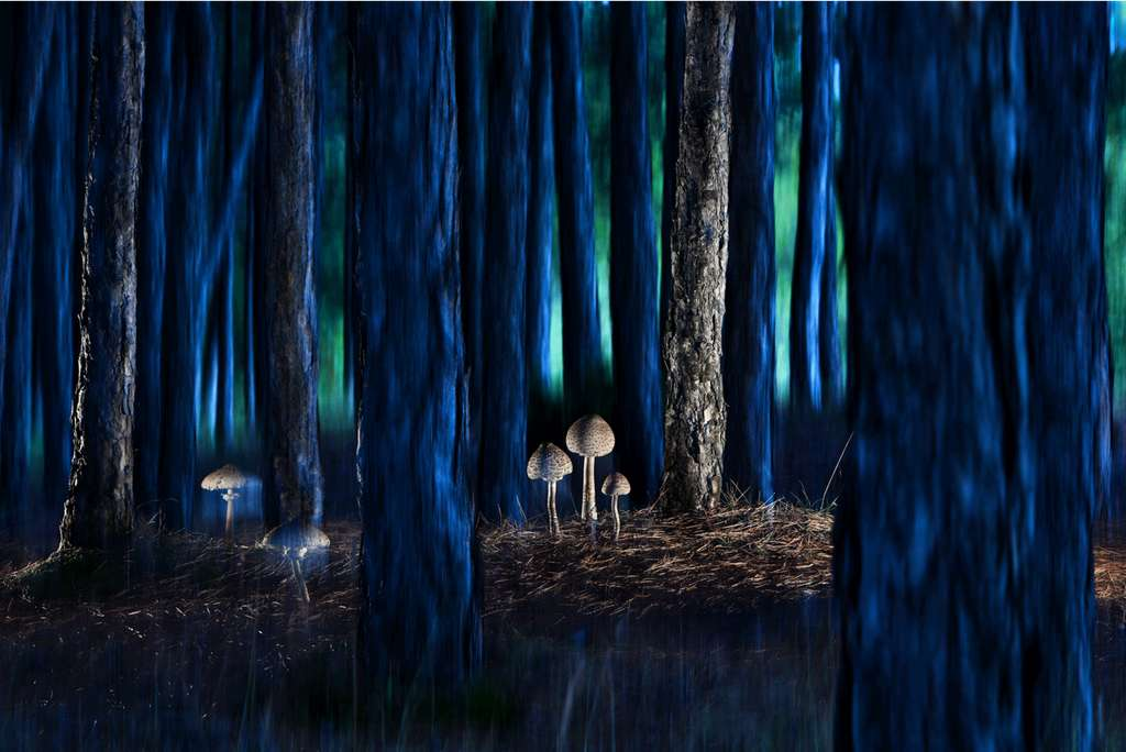 Rain's visitors at dusk. © Agorastos Papatsanis, BigPicture Natural World Photography Competition