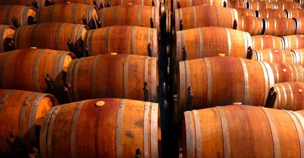Comment transformer le raisin en vin ? Ici, des tonneaux de vin. © LoggaWiggler CCO