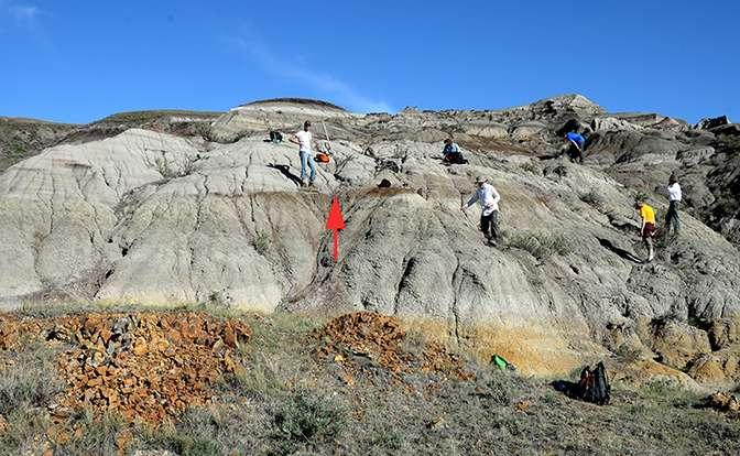 Carrière du parc provincial Dinosaur de l'Alberta, au Canada, où le spécimen de Mercuriceratops gemini a été découvert (au niveau de la flèche rouge). © Philip J. Currie