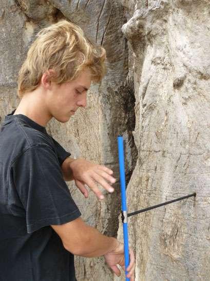 Un échantillonnage à l'aide d'une tarière dans le tronc du baobab sacré de Warang. © Sébastien Garnaud