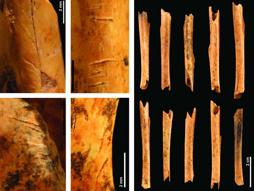 Exemples de stries de découpe, pour le dépeçage et la désarticulation, et de cylindres diaphysaires, pour récupérer la moelle, observées sur les ossements de lapin à Pié Lombard. © Maxime Pelletier