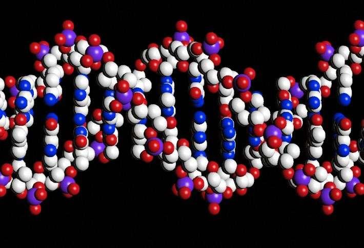 L'ADN pourrait être utilisé pour déterminer l'agressivité d'un cancer, car les gènes qui s'activent dans les cellules tumorales sont porteurs d'informations exploitables. © Peter Artymiuk, Wellcome Images, Flickr, cc by nc nd 2.0