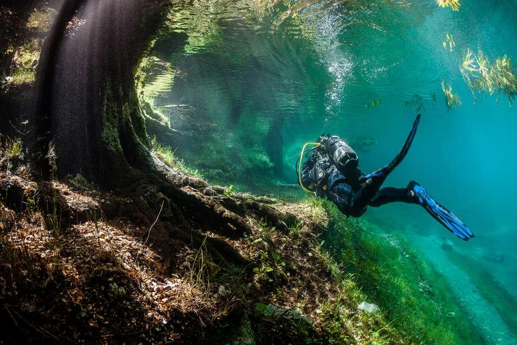 Une plongée au pied de l'arbre