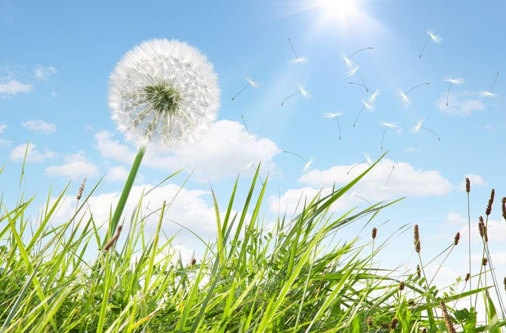 Si vous êtes allergique au pollen, évitez de tondre la pelouse. © Thaut Images, Adobe Stock