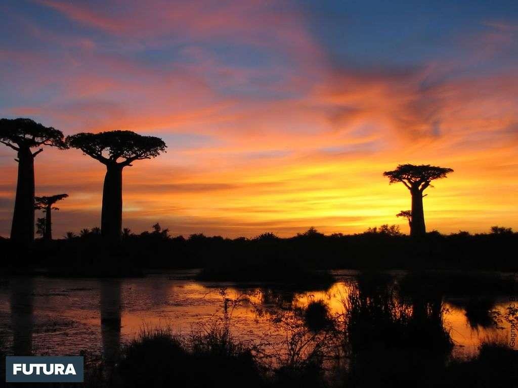 Coucher de soleil près de Morondava - Madagascar