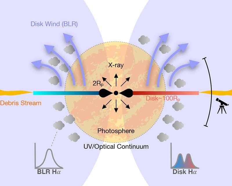 Un modèle des émissions ultraviolettes et dans le visible du TDE AT 2018hyz est montré dans ce diagramme. Un disque d'accrétion se forme rapidement après le TDE, il génère une émission de rayons X (flèches noires) à petites distances du trou noir central, émission qui n'est visible qu'à travers l'entonnoir vertical. Dans d'autres directions, les rayons X sont dégradés en énergie par le plasma de la photosphère ou dans les vents (winds) de matière issus du disque, devenant des émissions UV dans le visible et optiques. L'émission d'une raie de l'hydrogène H alpha est produite sur deux sites distincts en dehors de la photosphère, notamment dans un grand disque elliptique en rotation où un effet Doppler se produit. © Tiara Hung