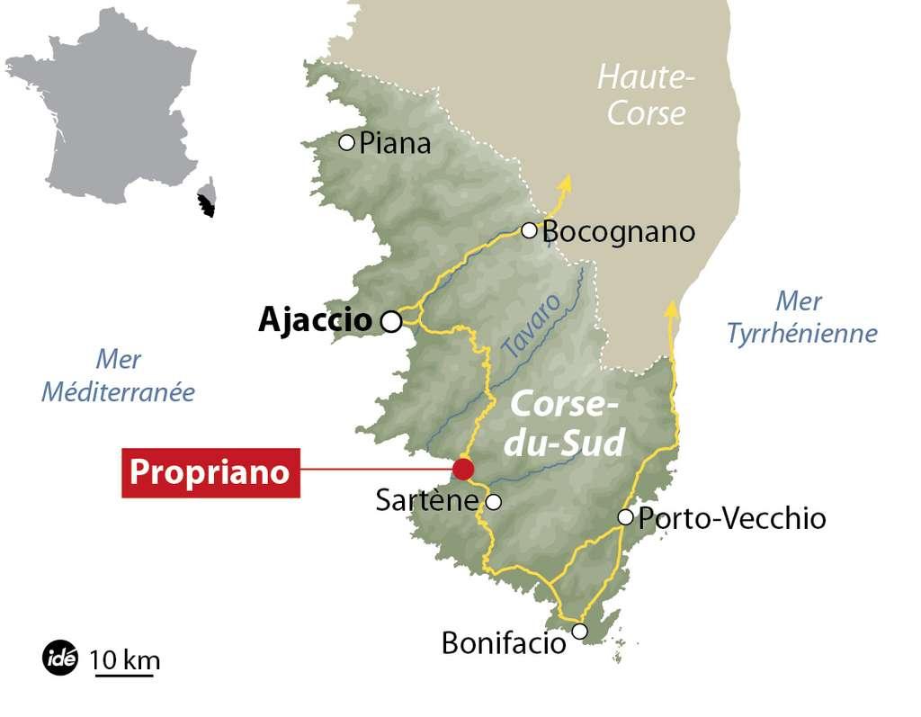 Le premier cas de contamination par la bactérie Xylella fastidiosa a été recensé à Propriano, en Corse-du-Sud. © idé