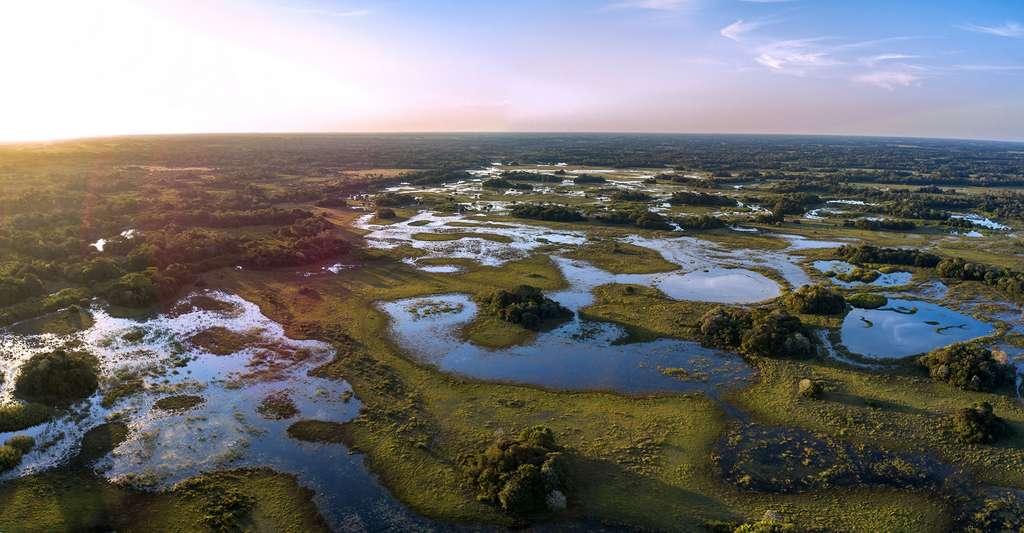 Le Pantanal, la plus grande prairie humide de la Planète