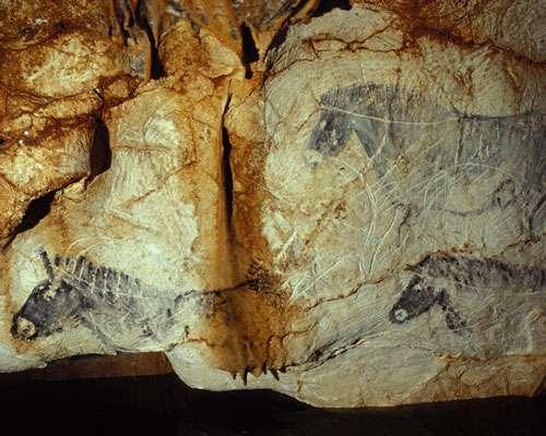 Fig. 9. Les chevaux sont les animaux le plus souvent représentés dans l'art paléolithique postérieurement à l'Aurignacien. Grotte Cosquer (Marseille). © Cliché J. Clottes. Tous droits réservés