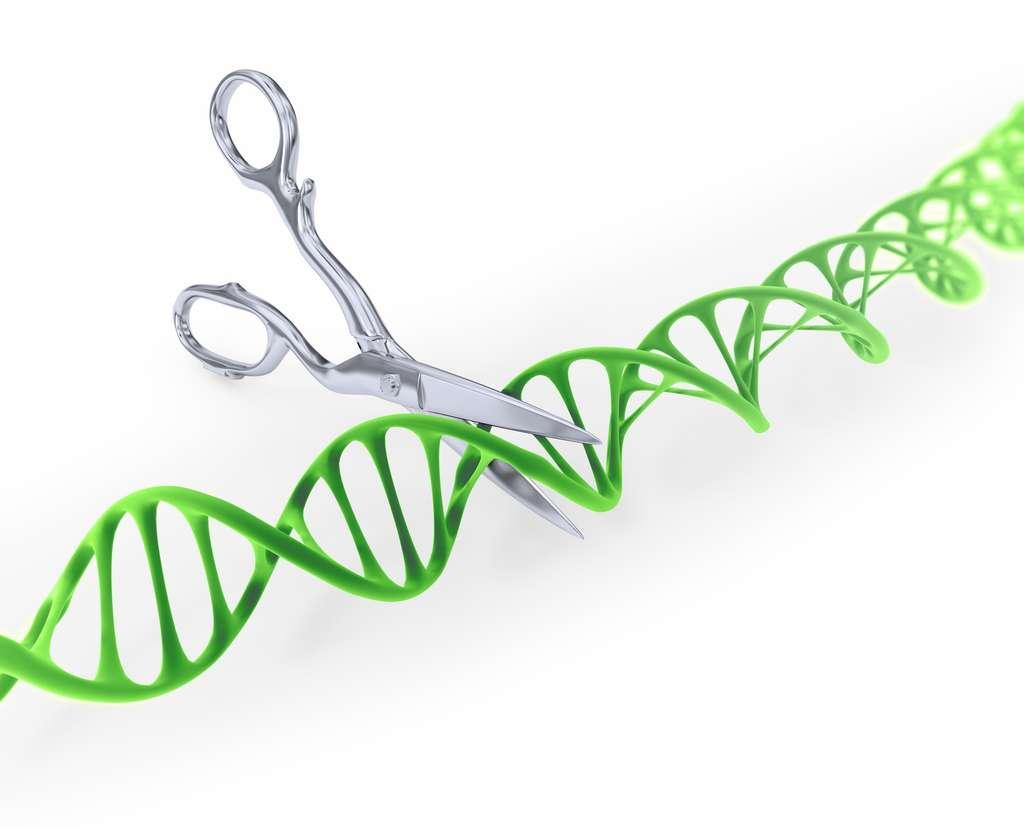 L'outil d'édition du génome CRISPR-Cas9 agit comme des ciseaux moléculaires qui peuvent découper des gènes. © Mopic, Fotolia