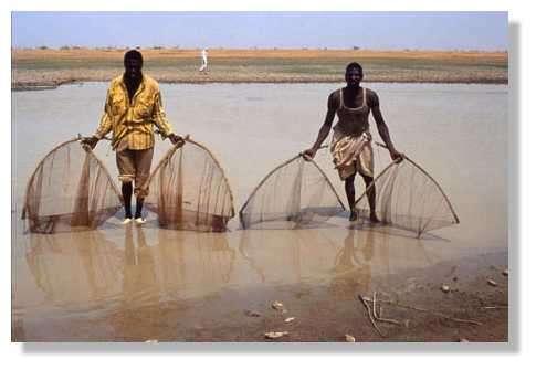 Pêcheurs montrant les filets : filets à deux mains. Utilisés pour les pêches d'épuisement de mares. Delta central, 14°nord, 4°ouest. Mali. © IRD/Yveline Poncet.