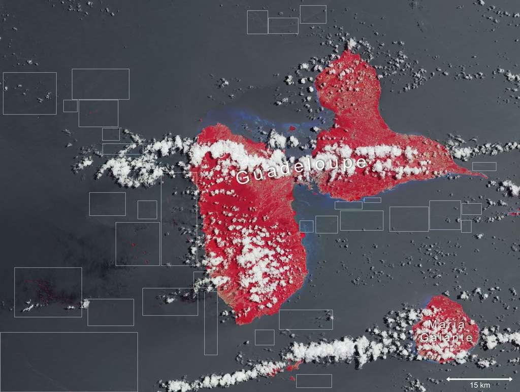 L'invasion des sargasses en Guadeloupe. Les zones entourées de rectangles dans l'océan indiquent les nappes d'algues : elles apparaissent en rose lorsqu'elles flottent et en gris sombre lorsqu'elles sont sous la surface. Les zones côtières bleues correspondent aux bas-fonds. © ESA
