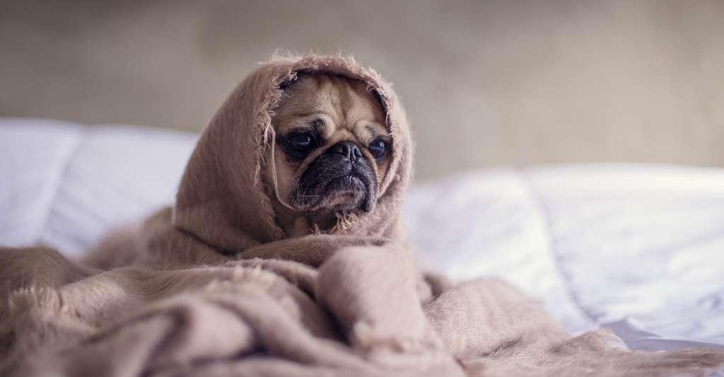 Si votre chien souffre d'arthrose, l'hiver s'annonce particulièrement difficile à vivre pour lui. Aménagez-lui donc un endroit chaud et douillet pour réduire au maximum ses douleurs articulaires. © Matthew Henry, Unsplash