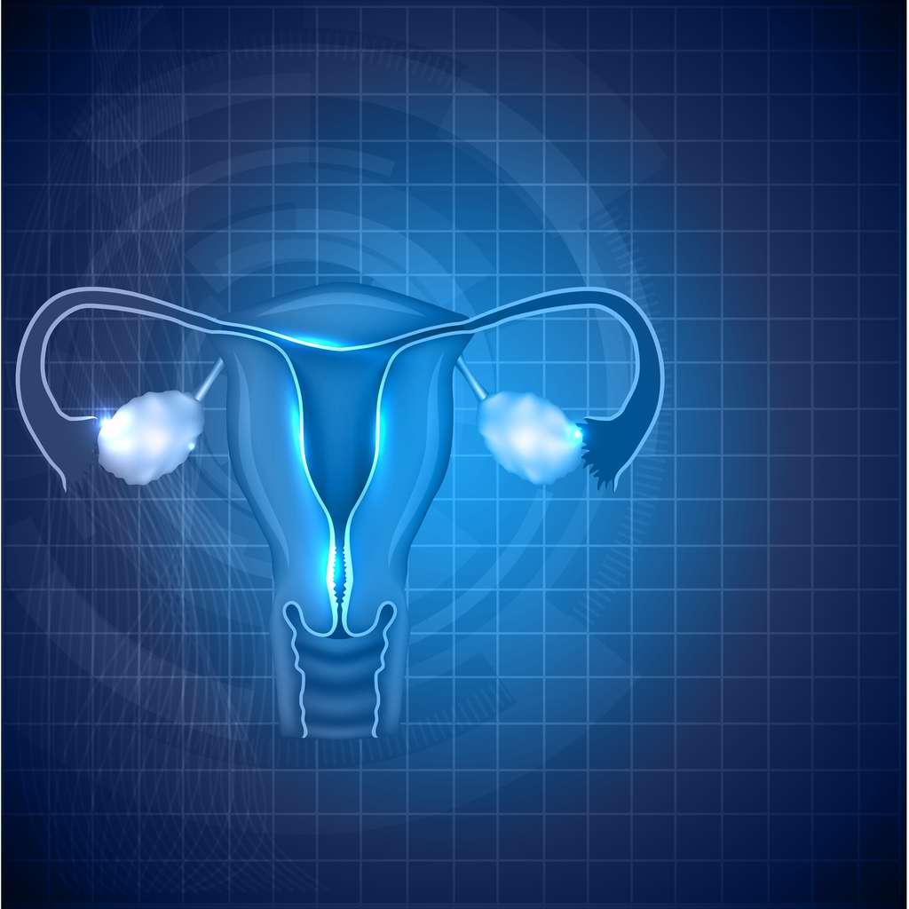 À la puberté, le cycle féminin commence. À la ménopause, l'ensemble de l'appareil reproducteur féminin arrête de fonctionner suite à l'arrêt de la production d'hormones ovariennes. ©Tefi, Shutterstock