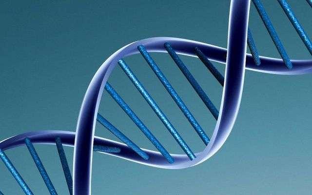 Les chercheurs de l'université de Tel Aviv ont assemblé des molécules hybrides peptides-ADN pour former des structures en double hélice, naturellement fluorescentes. © Caroline Davis, Flickr, DR