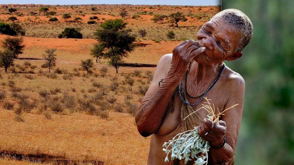 Les femmes bochimanes, des as de la cueillette, en Afrique australe