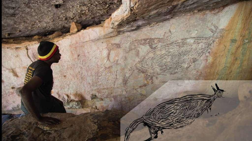Le propriétaire traditionnel, Ian Waina, devant la plus ancienne peinture pariétale d'Australie : un kangourou. © Peter Veth and the Balanggarra Aboriginal Corporation ; Illustration sur le bord droit en bas : Pauline Heaney