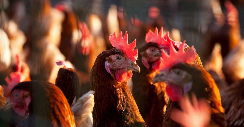 Au-delà de sa contribution au réchauffement climatique, l'élevage a aussi un impact sur la biodiversité, sur les cycles de l'azote et du phosphore, sur la ressource en eau, sur l'état des sols, etc. © Thierry RYO, Adobe Stock