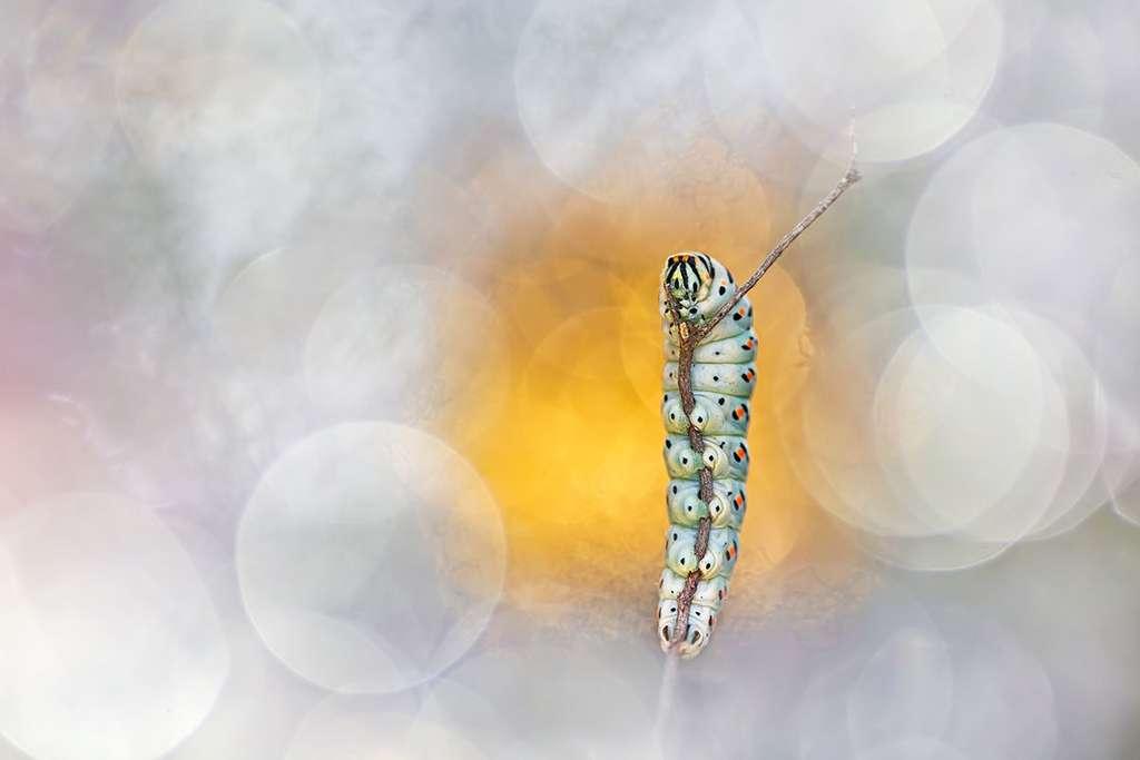« Glamourpillar », Grosseto, Italie. © Henrik Spranz