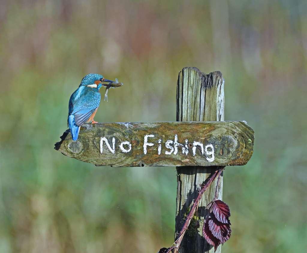 « It's a Mocking Bird. » © Sally Lloyd-Jones, Comedy Wildlife Photography Awards 2020