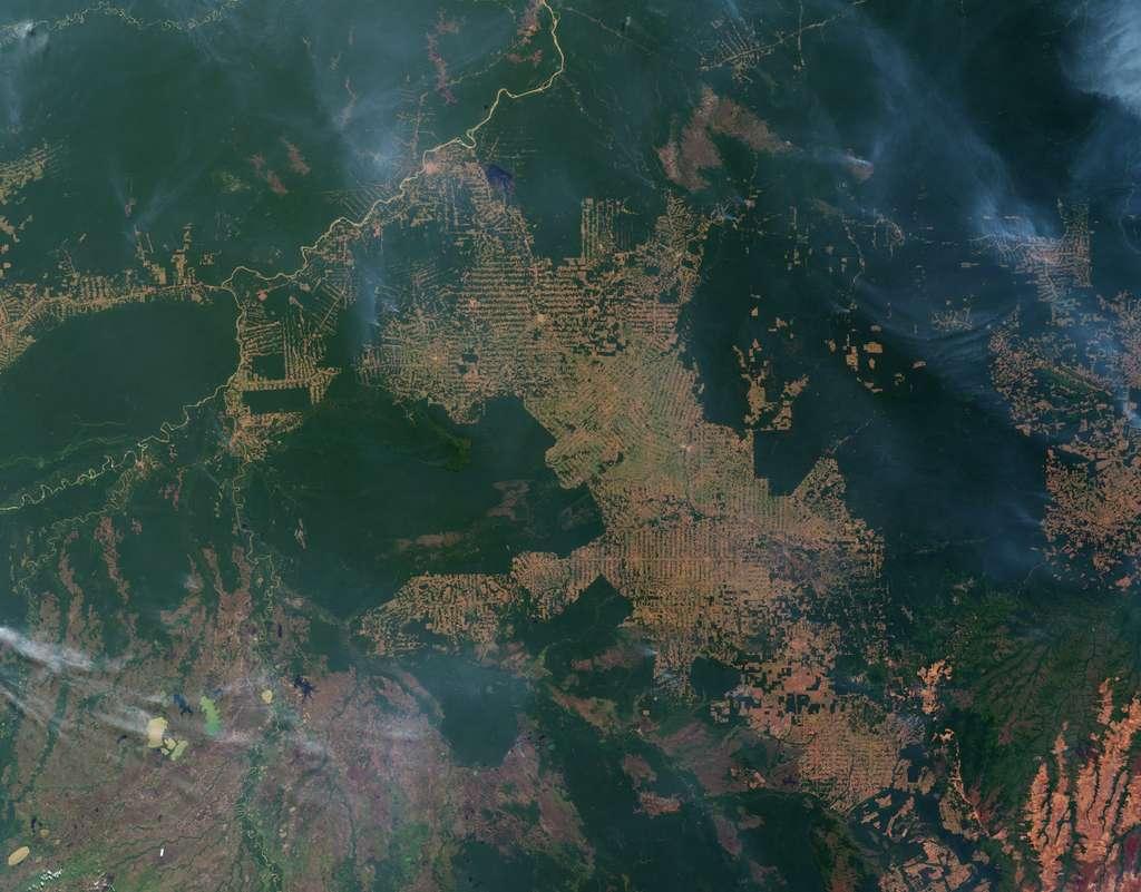 Déforestation en Amazonie vue de l'espace. © Nasa, EarthObservatory