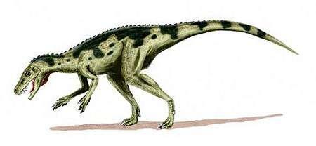 Reconstitution d'un Herrerasaurus, un des plus anciens dinosaures connus, vers -230 millions d'années (Trias supérieur). Crédit Commons