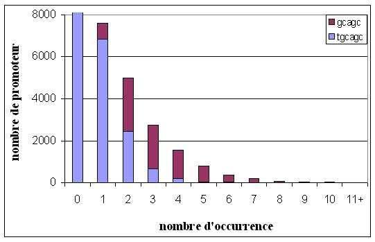 Figure 8. Distribution cumulée des consensus établis par Motif Sampler et Oligo-analysis