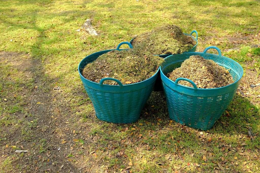 L'herbe broyée (mulch) fournit un excellent engrais au gazon. © mesamong, Fotolia