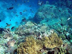 Cliquer pour agrandir. En Nouvelle-Guinée, les récifs fossiles du Pléistocène sont aussi riches en espèces que ceux d'aujourd'hui, malgré une baisse du niveau marin de 120 mètres. © Mila Zinkova CC by-sa