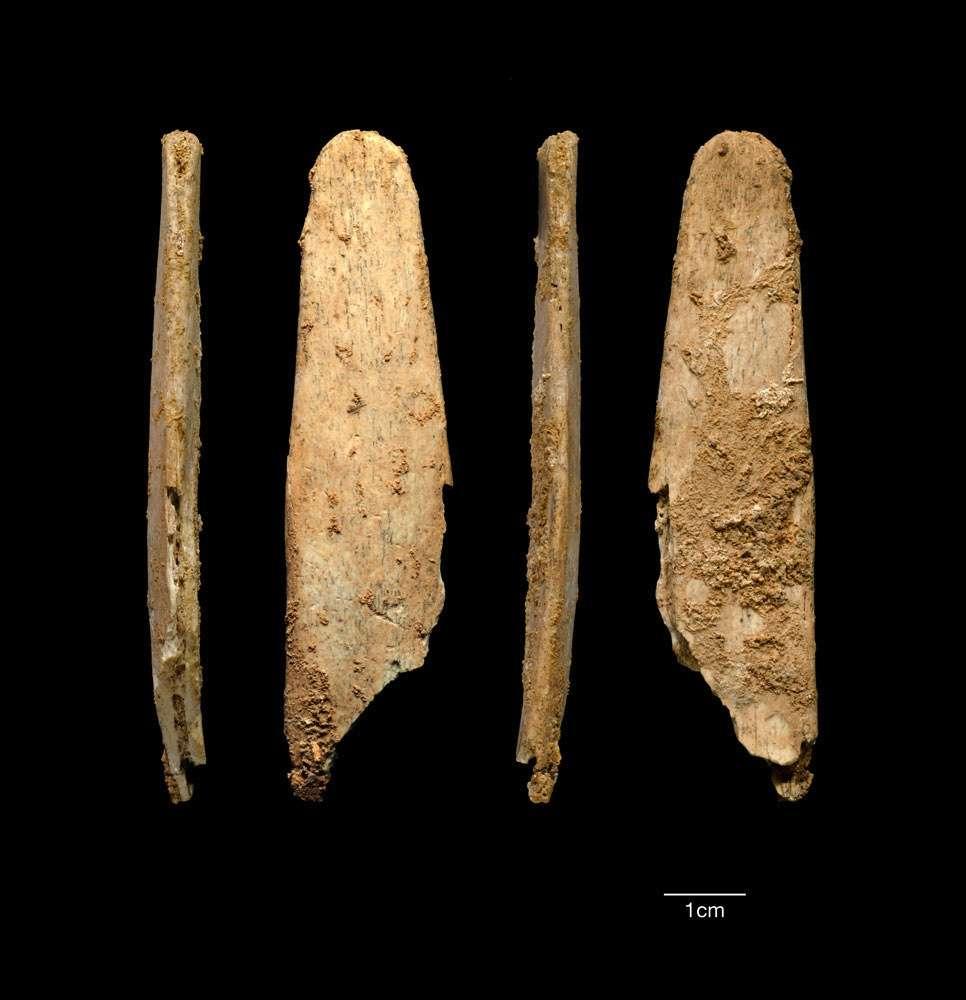 Voici les lissoirs mis au jour dans deux sites néandertaliens en France. Leur bout arrondi suggère qu'ils ont servi à travailler des matériaux tendres et non rigides comme de la pierre. Les auteurs ont de leur côté façonné des outils similaires qu'ils ont testés sur des peaux, et ont montré que lorsqu'ils cassaient, ils laissaient des fragments identiques à ceux récoltés. Cela sous-entend qu'ils devaient bien être conçus dans ce but. © Projets Abri Peyrony et Pech-de-l'Azé