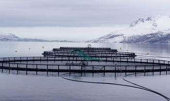 Ferme de saumons en Norvège. Le saumon norvégien « bio » commence à se démocratiser sur les étals de l'Hexagone. © Thomas Bjørkan, cc by sa 3.0