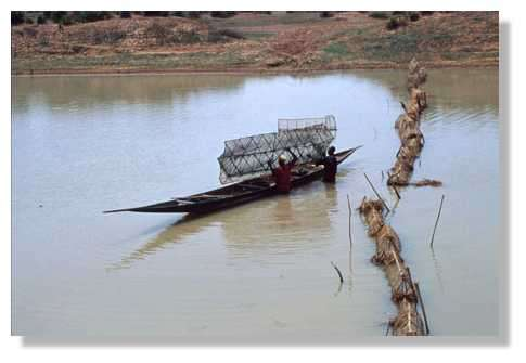 Relevé des nasses durankoro d'un barrage sur un bras du fleuve Niger : les nasses sont secouées pour faire tomber les poissons au fond de la pirogue. Delta Central du Niger. Mali. © IRD/Yveline Poncet.