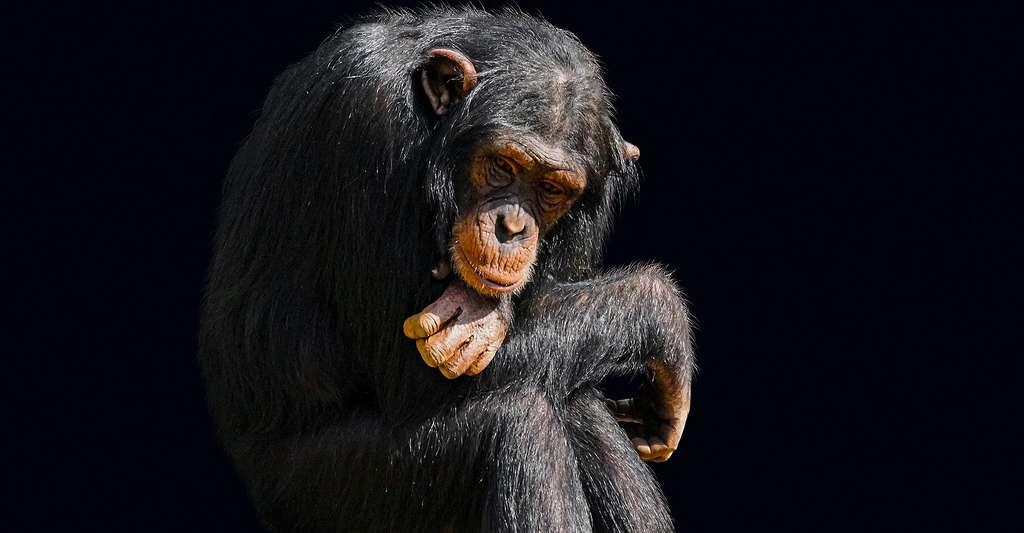 Kant et le chimpanzé. © Gellinger, Pixabay, DP