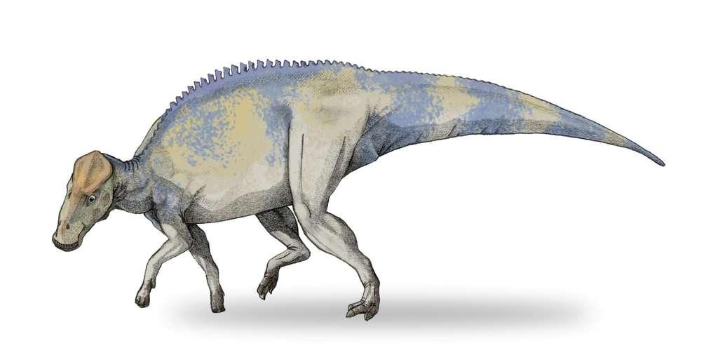 Une reconstitution d'artiste de Brachylophosaur canadensis. © Debivort Wikipédia, cc by sa 3.0