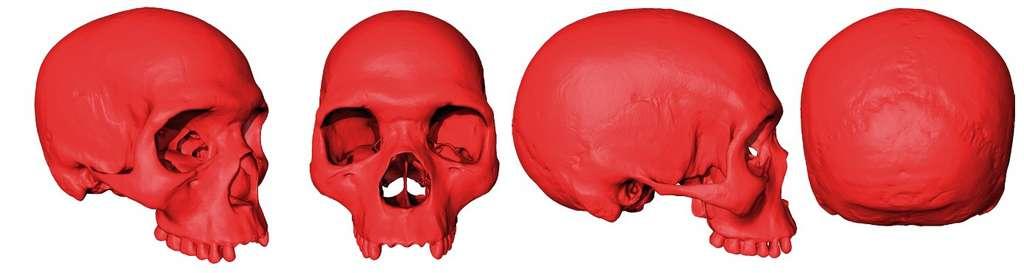 Modélisation de l'ancêtre commun (virtuel) à tous les membres de notre espèce, Homo sapiens. © Aurélien Mounier, CNRS/MNHN