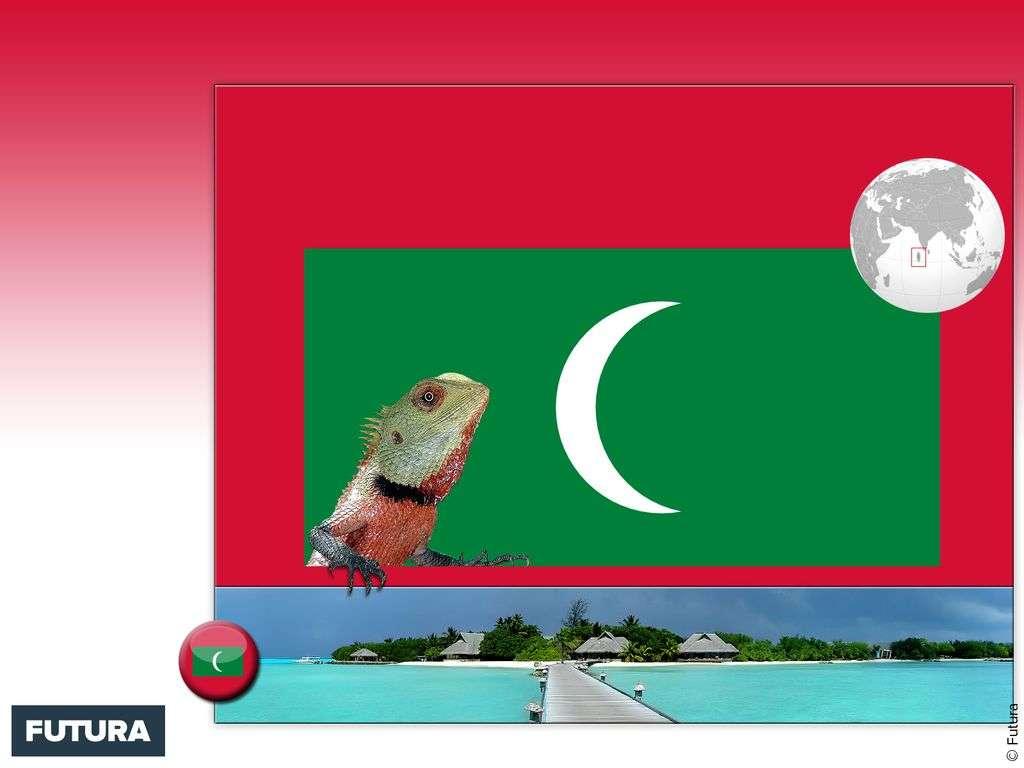 Drapeau : Maldives