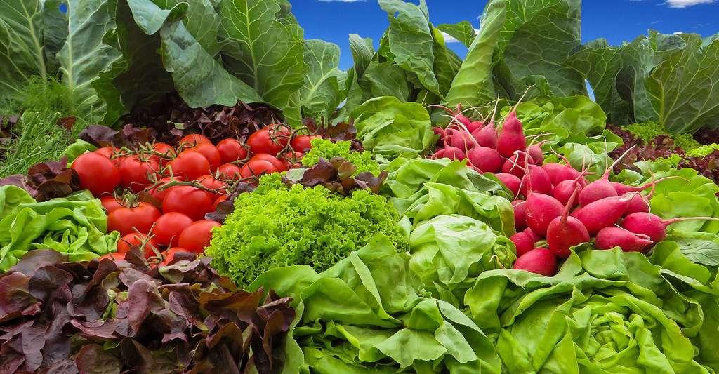 Des légumes insolites font leur retour dans nos potagers. © Gellinger, domaine public