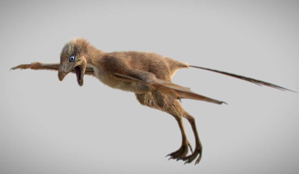 Belle reconstitution de Ambopteryx longibrachium. © M. Chung-Tat Cheung, Nature
