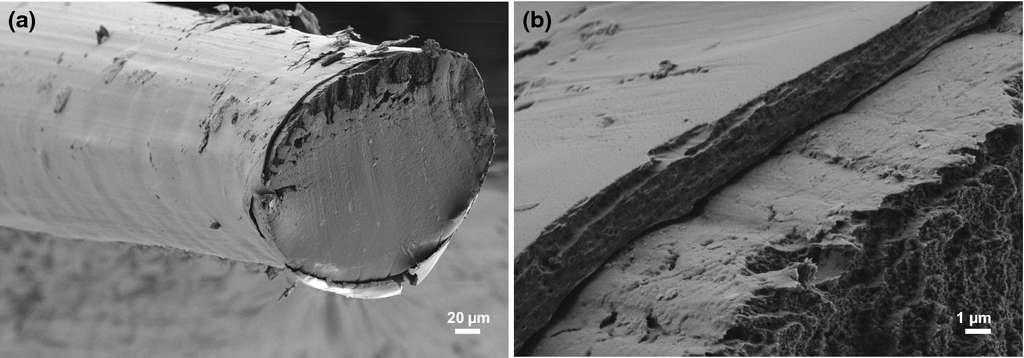 La fibre est constituée d'un cœur en cellulose d'environ 210 micromètres (µm) de diamètre entouré d'une gaine en acétate de cellulose de 3,40 µm. © Hannes Orelma et al, Cellulose, 2019